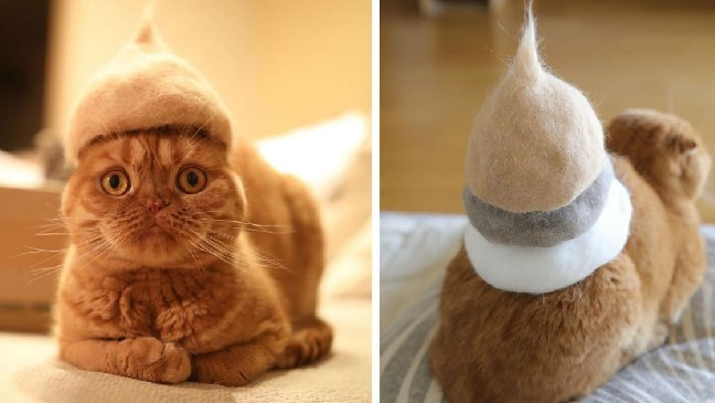 cat hat 1.jpg?resize=300,169 - Cats Wear Hats And They Are The Best! (10+ Photos)