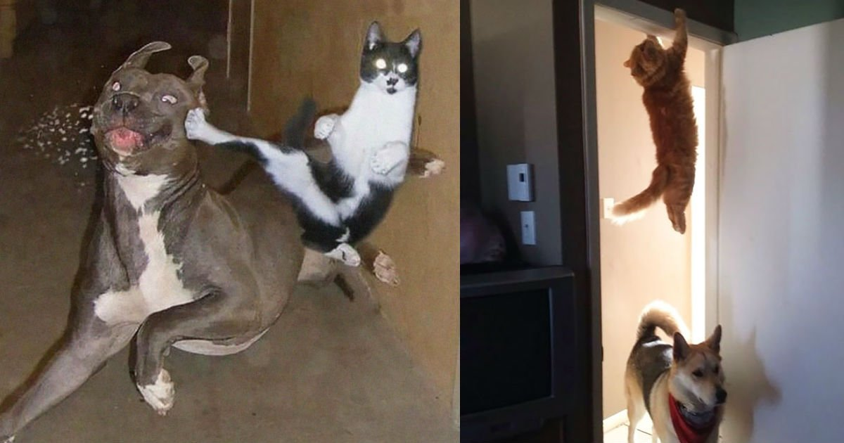cat ninja - 20+ Ninja Cats That Have Mastered The Ancient Art Of Ninjutsu