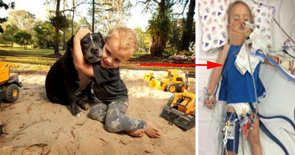 ec9584eab8b0 eab5aced959c - 강에 빠져 의식을 잃은 '꼬마 주인'을 구한 영웅 '반려견'