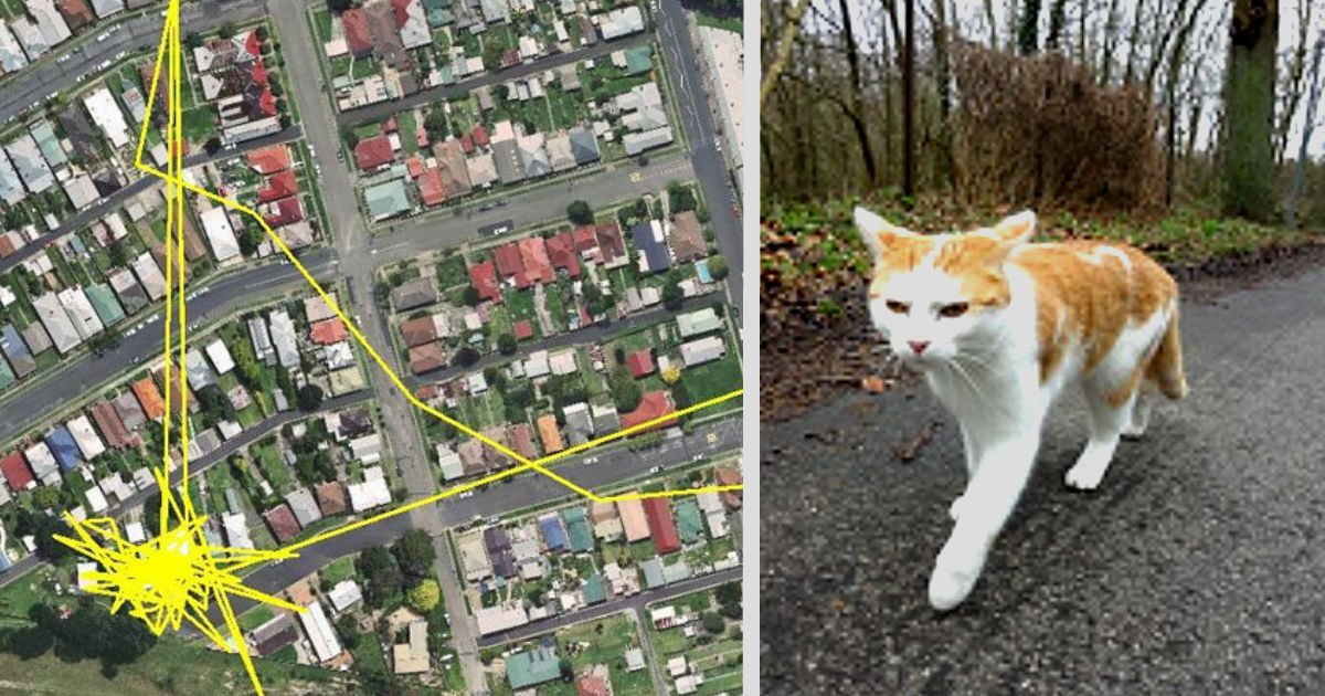 ec9db4eba684 ec9786ec9d8cresfs sdfaersdfdfassdf.jpg?resize=300,169 - We Put GPS Trackers On Pet Cats. Cat Owners Have Never Imagined The Results