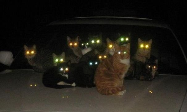 evil cats demons summoning satan 24 58d2695988533  605.jpg?resize=300,169 - 30+ Photos That Prove Cats Are Actually Demons