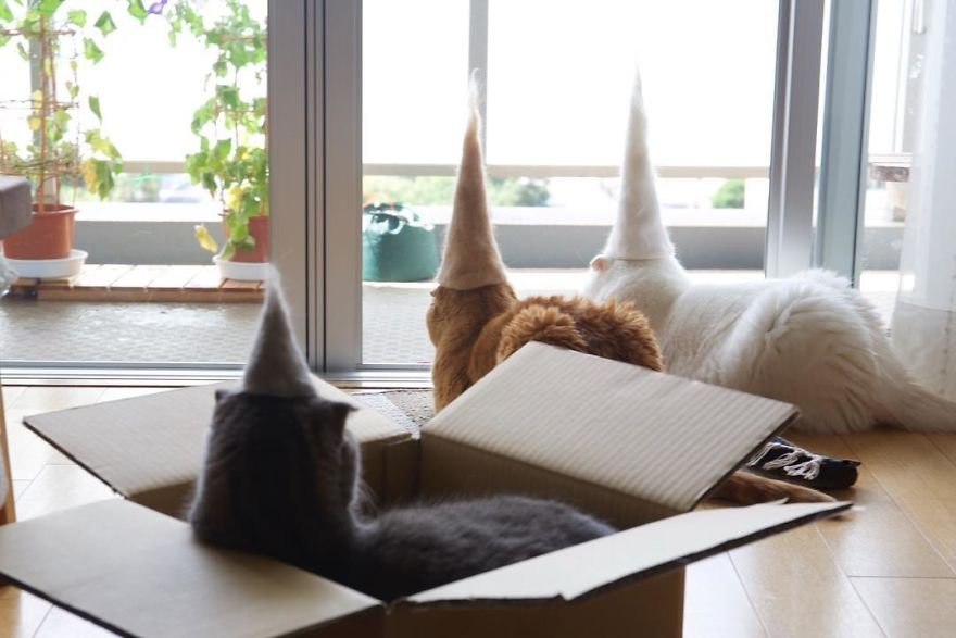img 59956278f2bc5 - Cats Wear Hats And They Are The Best! (10+ Photos)
