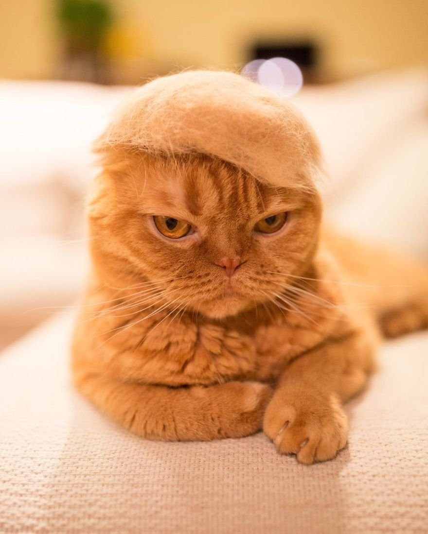 img 5995629d0e306 - Cats Wear Hats And They Are The Best! (10+ Photos)