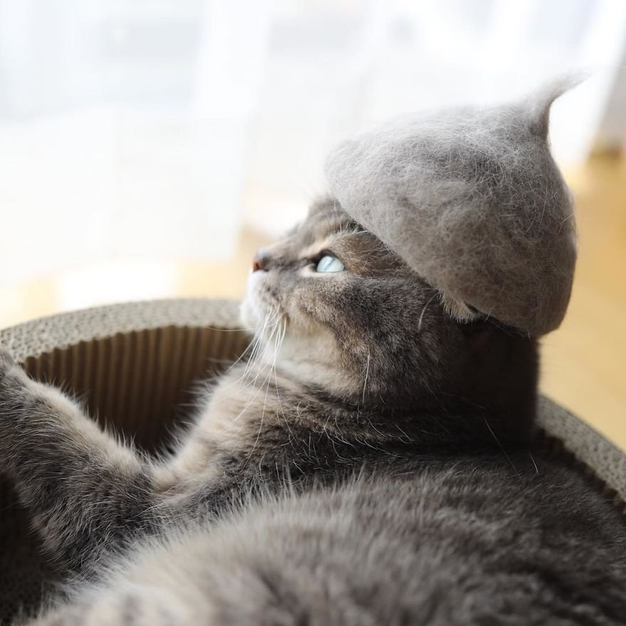 img 599562c7de01b - Cats Wear Hats And They Are The Best! (10+ Photos)