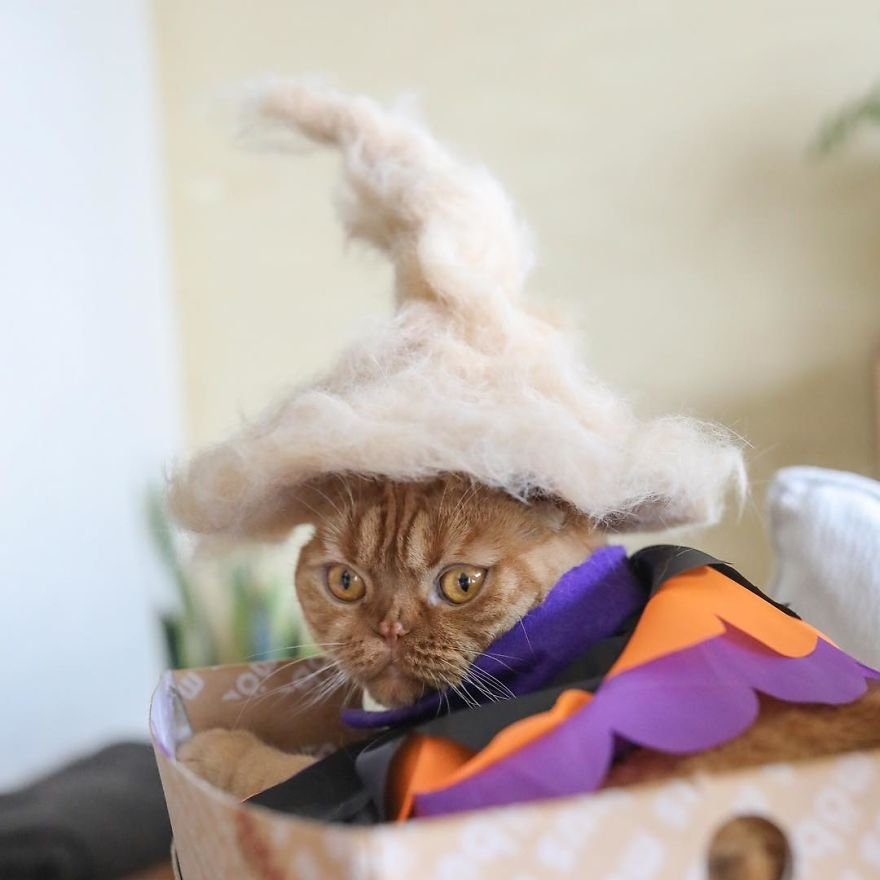 img 599562ea66a94 - Cats Wear Hats And They Are The Best! (10+ Photos)