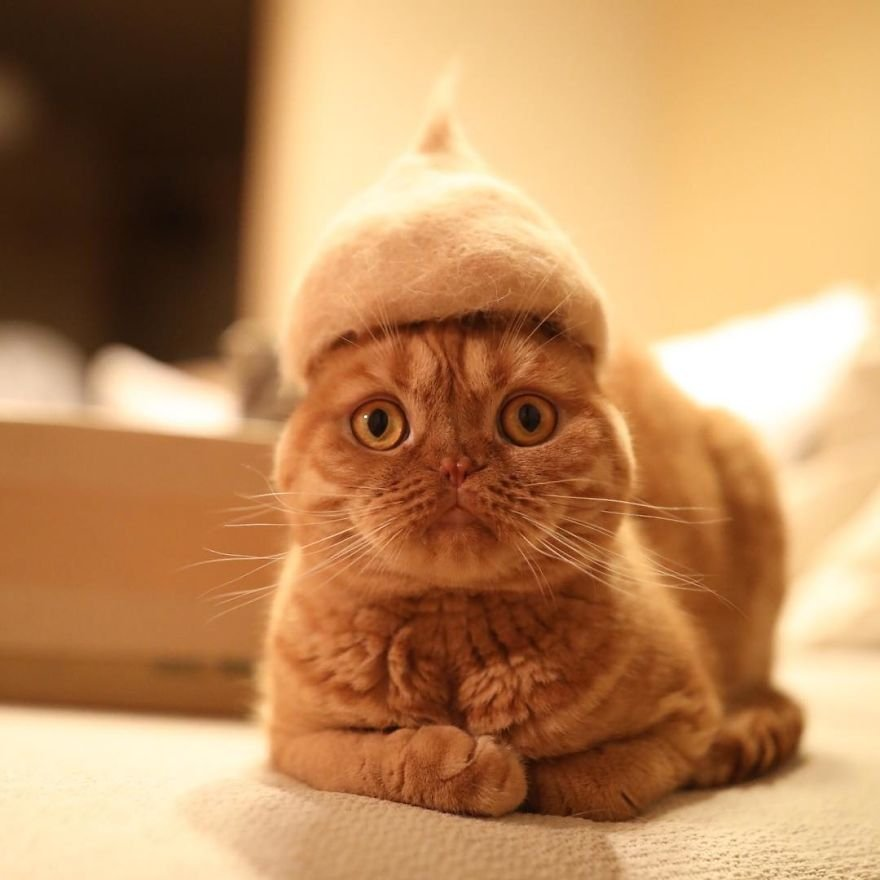 img 599562fb7f8e1 - Cats Wear Hats And They Are The Best! (10+ Photos)