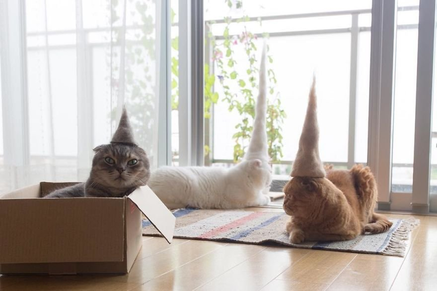 img 59956302e5a73 - Cats Wear Hats And They Are The Best! (10+ Photos)