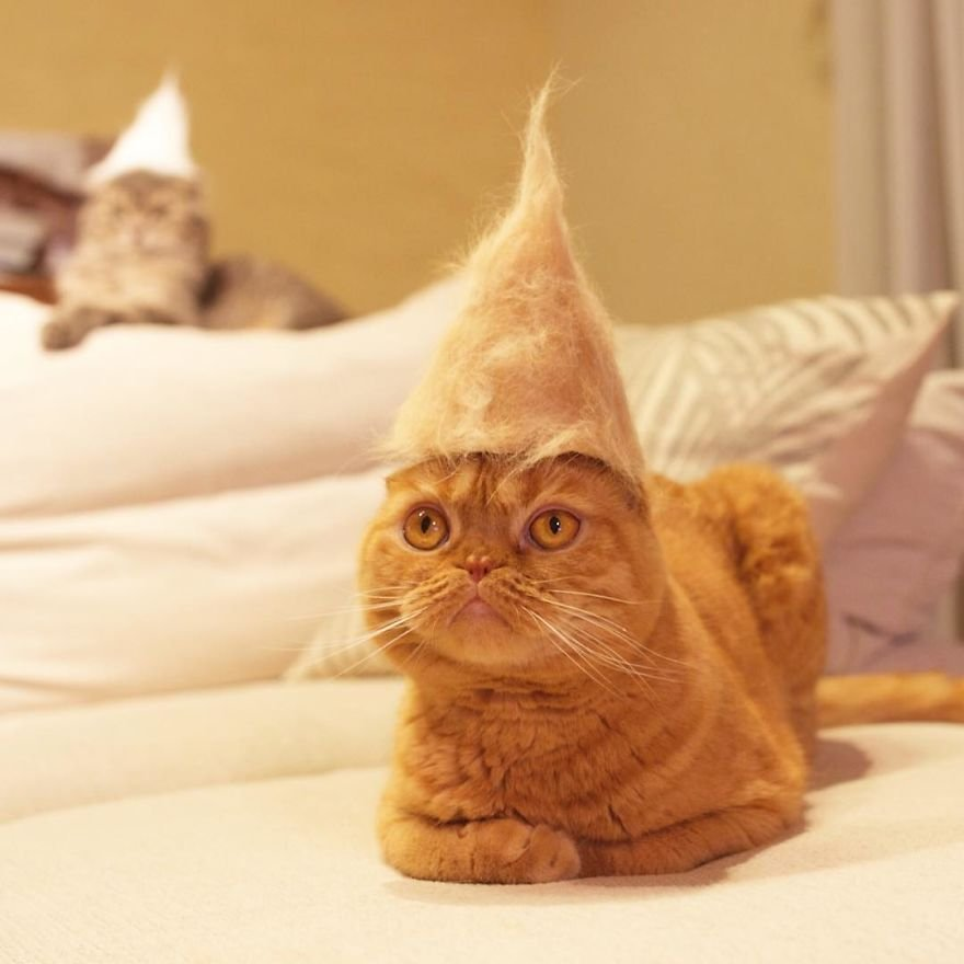 img 59956346b3505 - Cats Wear Hats And They Are The Best! (10+ Photos)