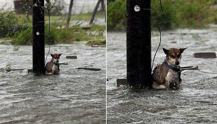 img 59a710b593a3b.png?resize=412,232 - 暴雨の打たれながら震えていても最後まで待った犬