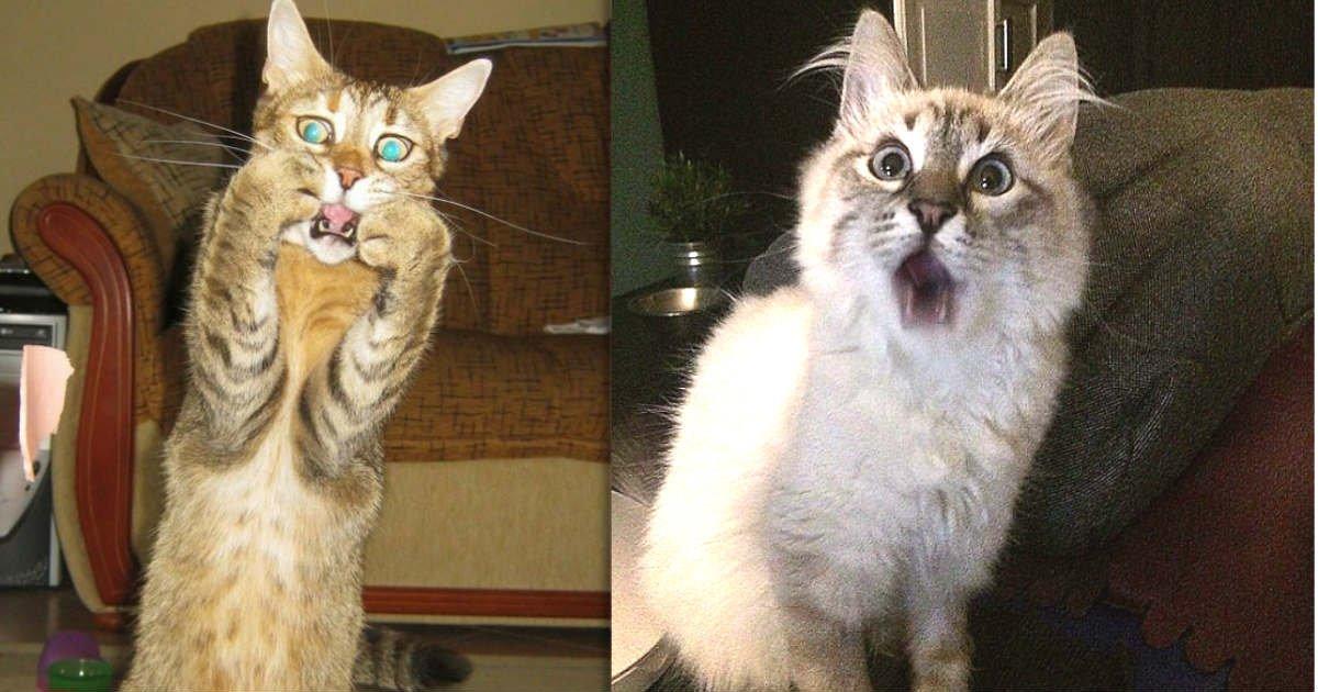 thumbnail 4.jpg?resize=412,232 - 15+ Dramatic Cats Who Seriously Deserve An Oscar