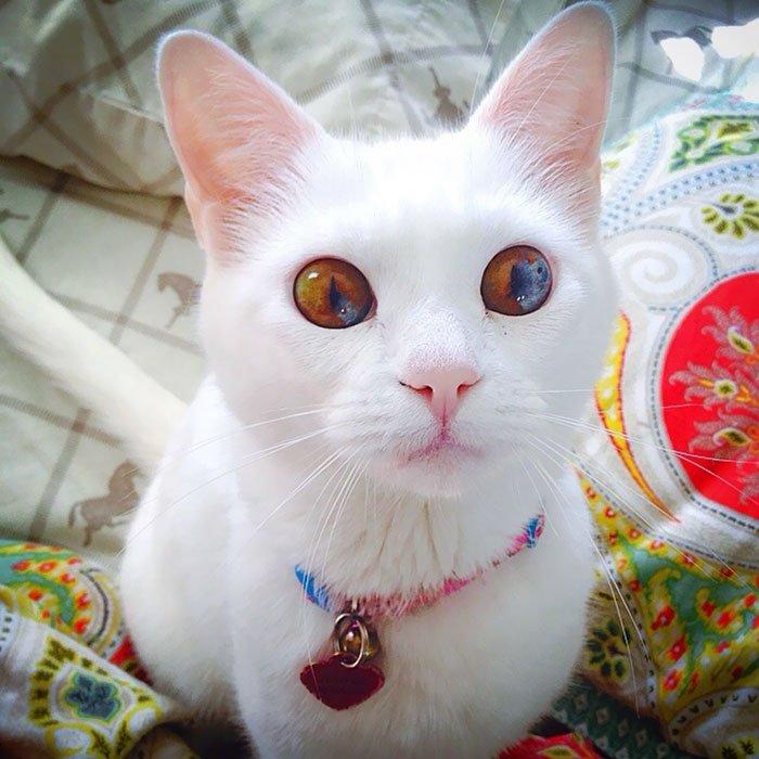 Universe Kitten