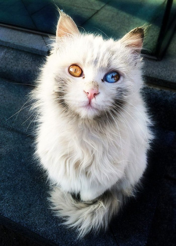 This Cat Has The Power To Mesmerize
