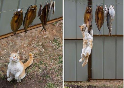 """10 34 - """"아파트 뽑아!"""" 집사들의 심장을 저격하는 귀여운 동물들 (사진 20장)"""