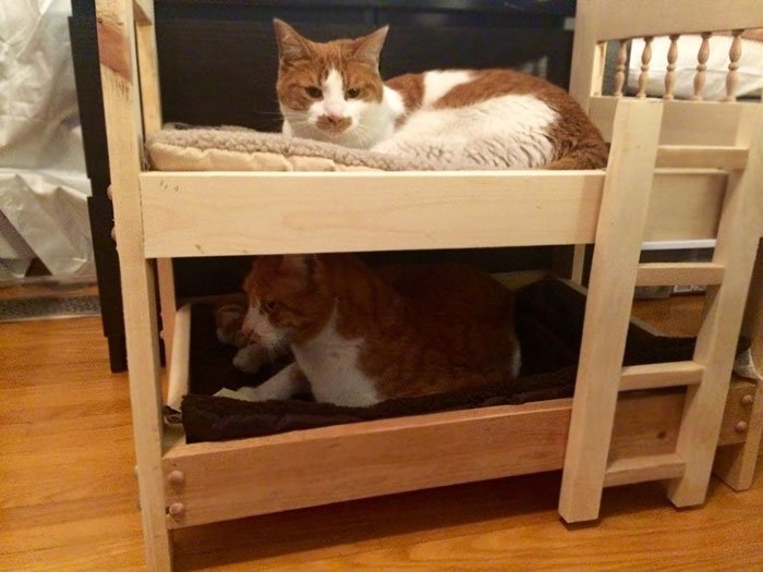 My Dad, Who Hates Cats, Built Bunkbeds For My Boys
