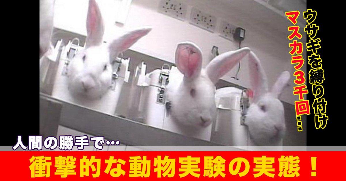 88 18.jpg?resize=1200,630 - 人間の勝手で…ウサギを縛り付けマスカラ3千回。衝撃的な動物実験の実態!