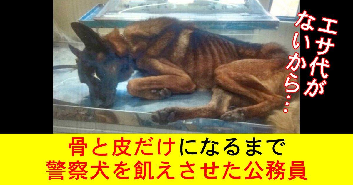 88 21 1.jpg?resize=412,232 - エサ代がないから…骨と皮だけになるまで警察犬を飢えさせた公務員