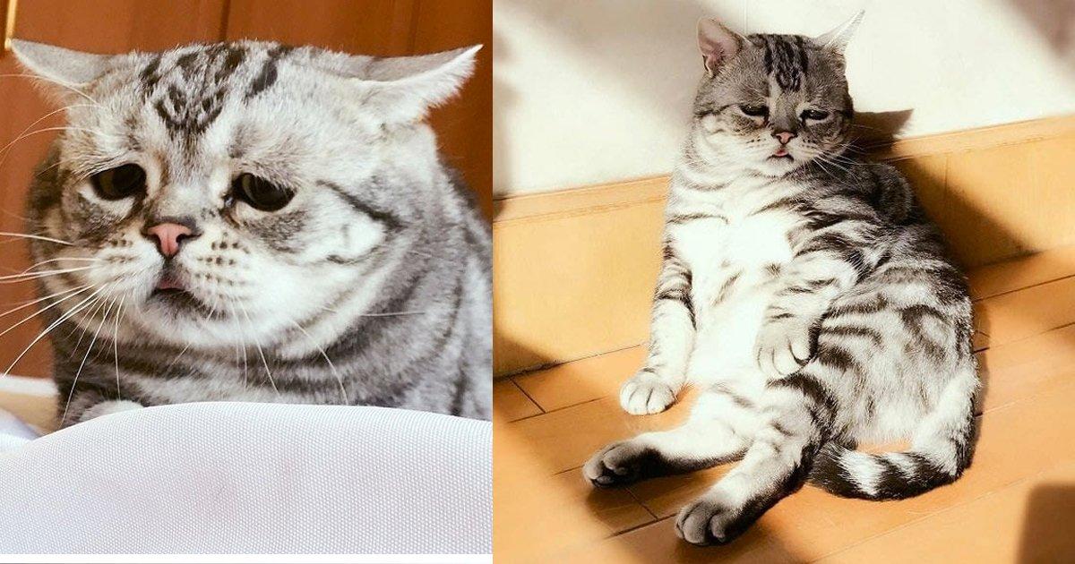 c586fa718c5ecf52a5e8dcc5a2fe4b28 1.png?resize=412,232 - 還在傻眼貓咪?看看最萌網紅「哭哭貓」是如何融化廣大鄉民!網友:「小舌頭露出來太過分了」