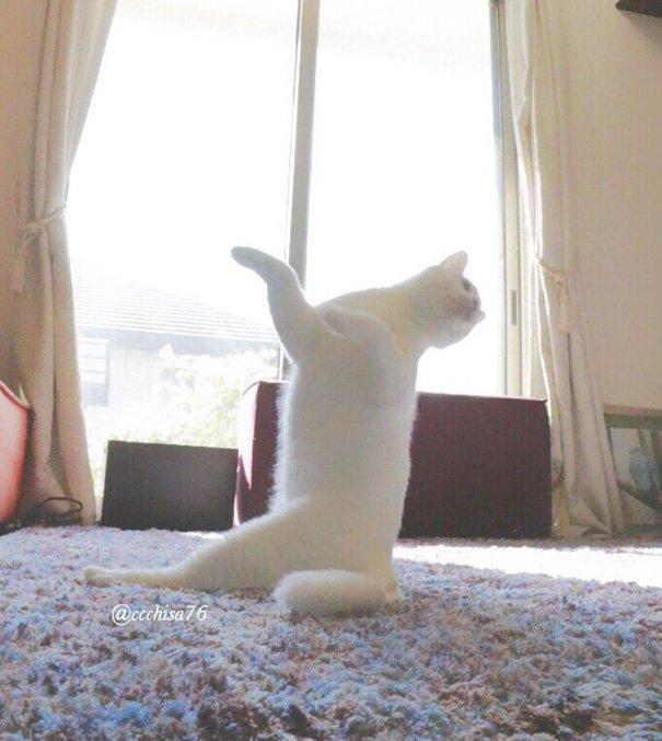 ballet-cat-japan-17