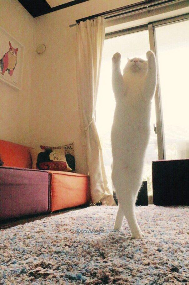 ballet-cat-japan-43
