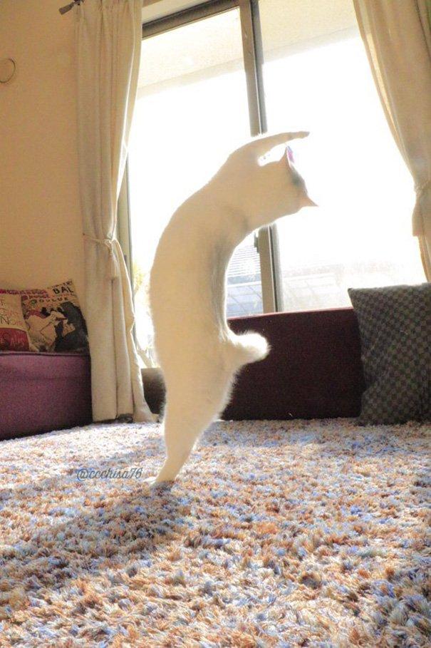 ballet-cat-japan-44