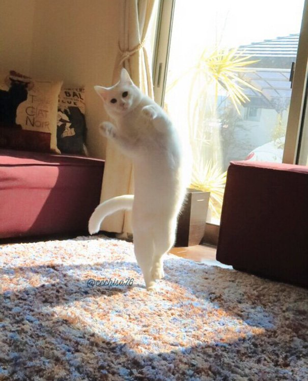 ballet-cat-japan-46