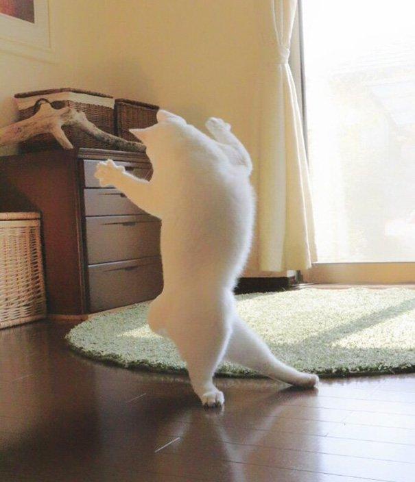 ballet-cat-japan-7