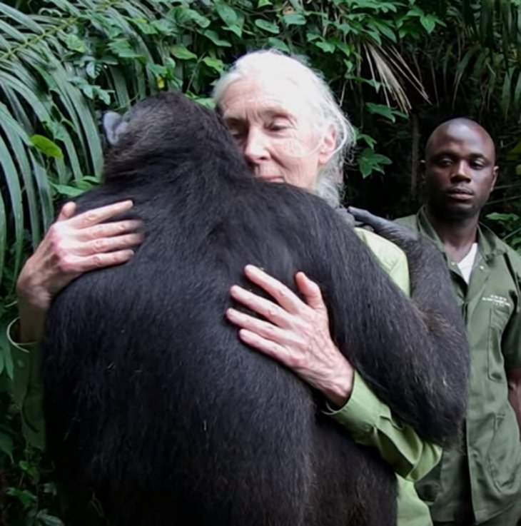 chimp released rescuer chimp3 - She Takes Care Of Sick Chimp. Chimp Is About To Be Released, And Her Final Act Is Tear-Dropping