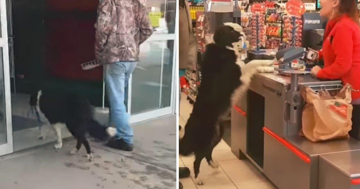 dog-shopping-treats