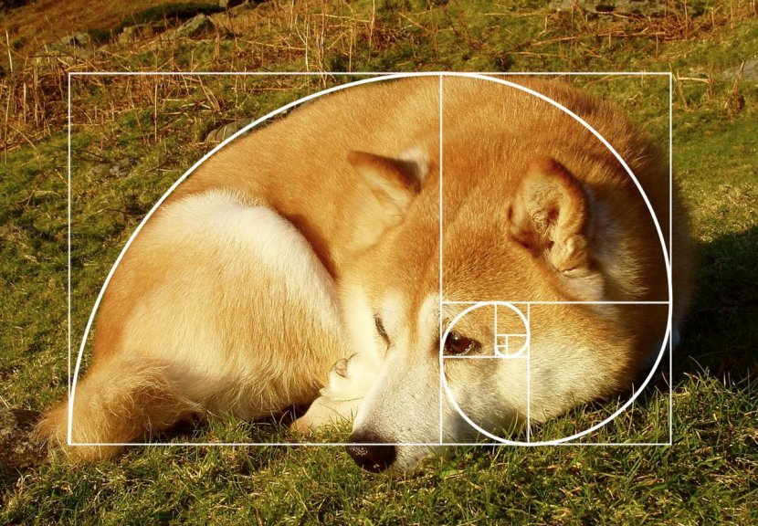 dog2 1.jpg?resize=1200,630 - 日網民隨便拍下家中柴犬,意外發現竟符合「黃金螺旋1.618比例」成為超完美柴柴!
