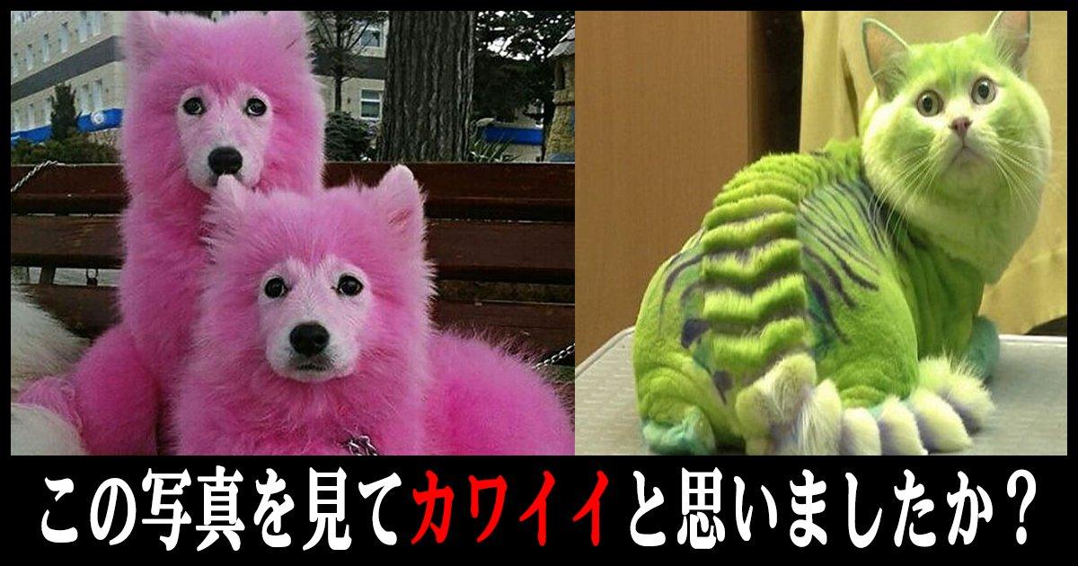 doubutu th.png?resize=412,232 - この写真を見てカワイイと思ったあなた!それって動物虐待かも!