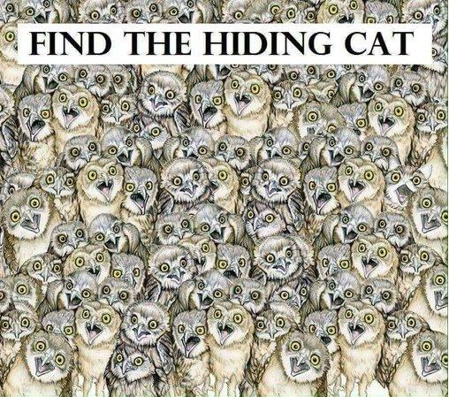 e689bee8b293e592aa1.jpg?resize=412,232 - 傻眼貓咪!網路瘋傳能在「1分鐘找到貓咪」的人IQ高達140!網友看到解答:「這是耍我嗎?」