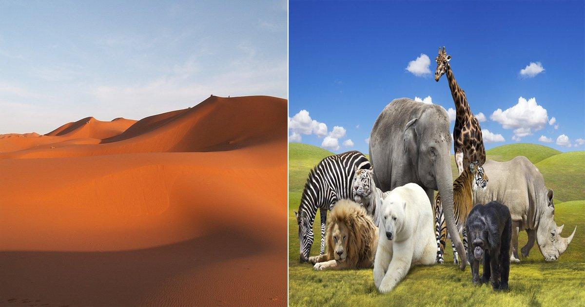 "ec82aceba789ed858cec8aa4ed8ab8 - ""당신이 사막에서 버리고 갈 동물은?"" 소름끼치게 들어맞는 심리 테스트!"