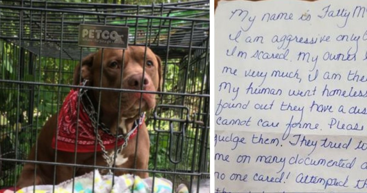 ec9db4eba684 ec9786ec9d8cdsfsdfdsfdssdfvcvxc - Woman Leaves A Dog In Front Of The Shelter With Heartbreaking Note