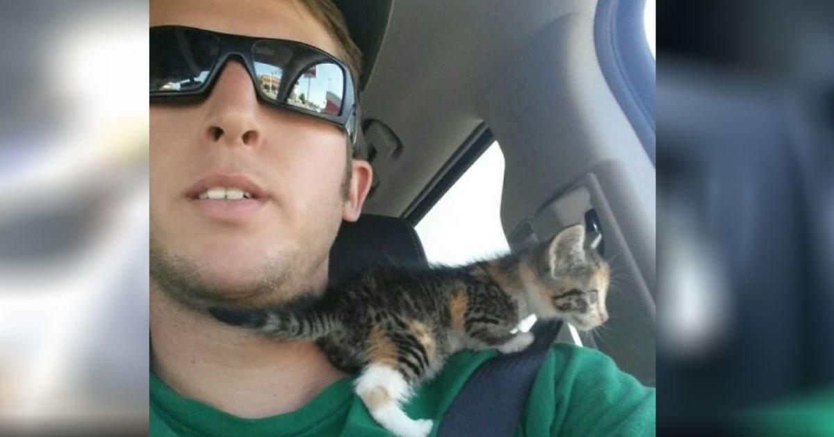 ec9db4eba684 ec9786ec9d8cfaceklmfldsjf - Driver Suddenly Finds Baby Kitten In Front Of Him. He Takes Her In The Car