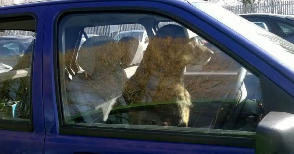 ec9db4eba684 ec9786ec9d8cfacesdfdf.jpg?resize=300,169 - Now It's Crime To Leave Pets In Hot Cars. What Is Your Stand On The New Law?