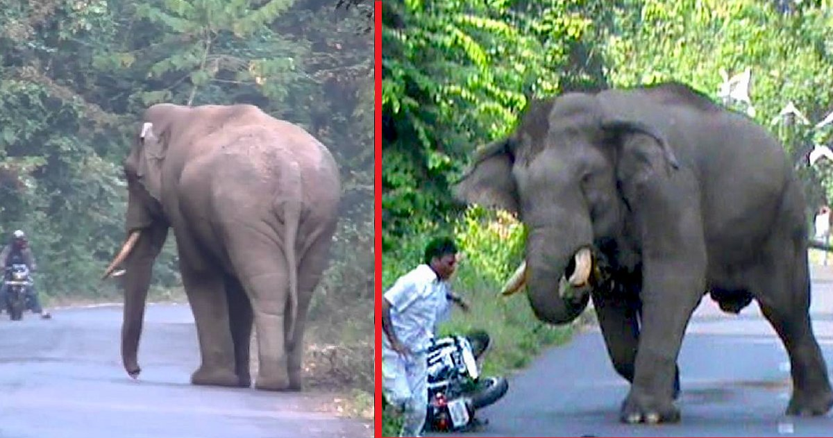 eca09cebaaa9 ec9786ec9d8c 21 - Elephant Suddenly Chases After Man On Bike. Video Captures Reason Behind Elephant's Sudden Move