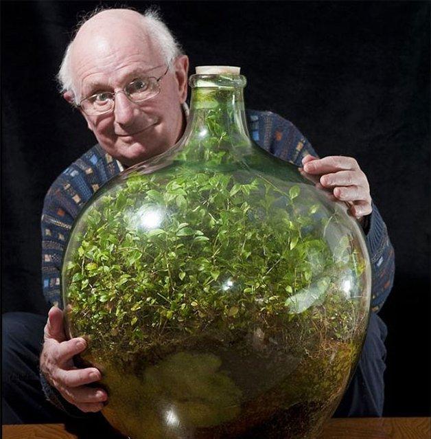 img 59ae37f1b7ef7.png?resize=1200,630 - Inglês cultiva planta em garrafa, que não recebe água há 56 anos, mas permanece verde e viva