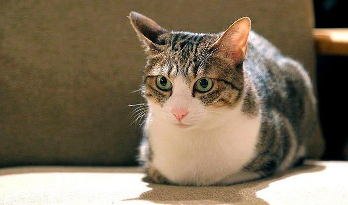 img 59c2b8d425f18.png?resize=1200,630 - 猫に間違って引っ掻かれて「勃起」できない可能性もある