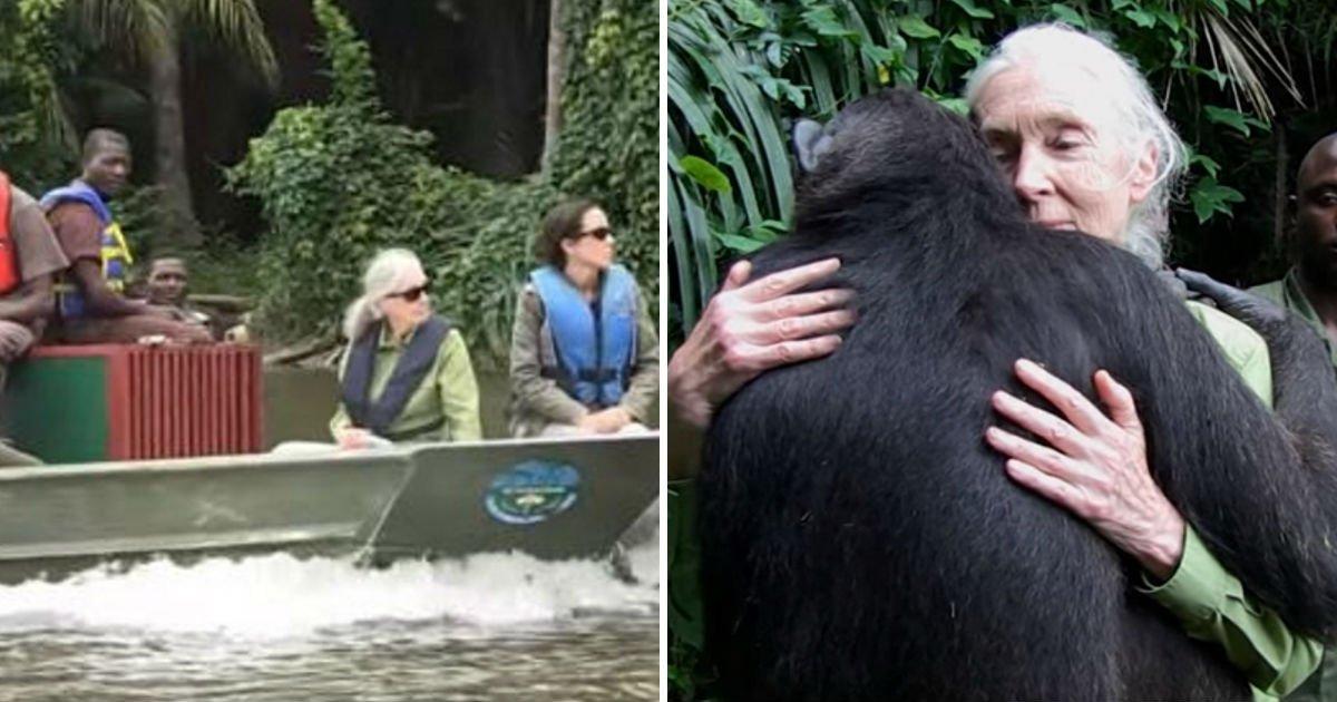 jane-goodall-saves-chimp