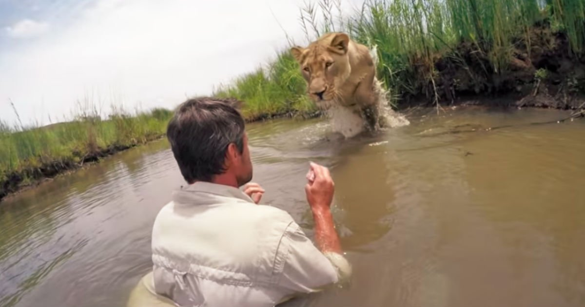man saves lioness life.jpg?resize=300,169 - Man Visits Lioness And Straps Camera Years After Saving Her Life. Then, He Believes In Her And Gets Closer