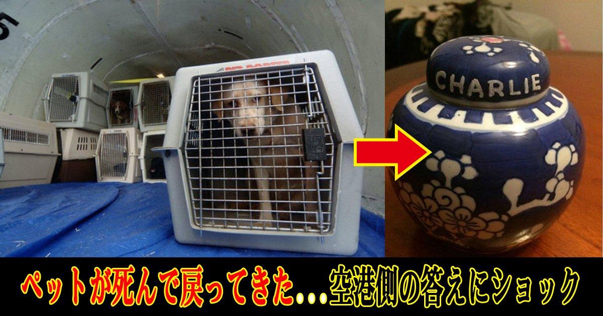 peto th.png?resize=412,232 - 飛行機に乗せるため空港で預けたペットが死んで戻ってきた…その原因は?