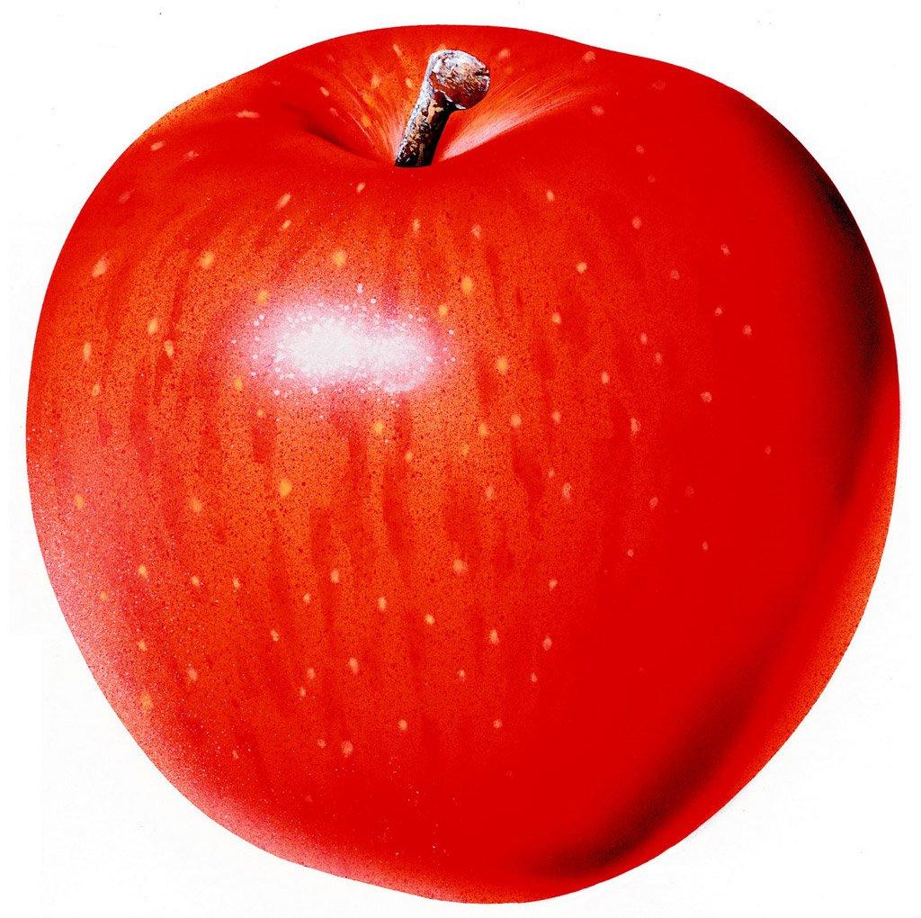 りんご 写真 フリー에 대한 이미지 검색결과