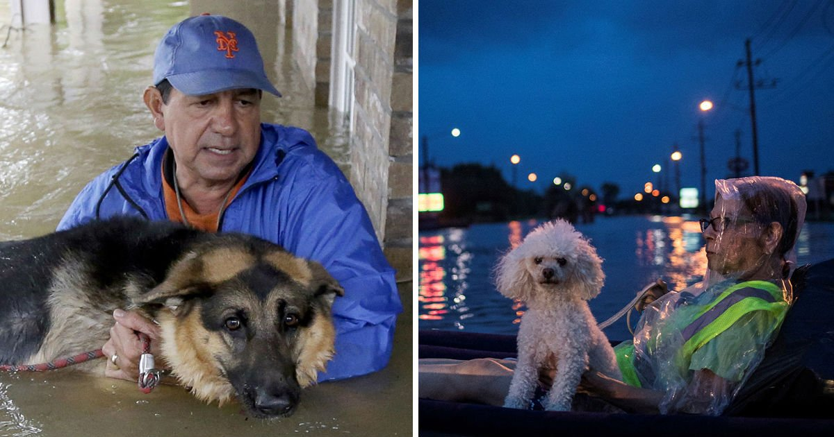 saved pets during hurricane - The Photos Show The Moment Of The Owners Saving Their Pets. They Were All Desperate