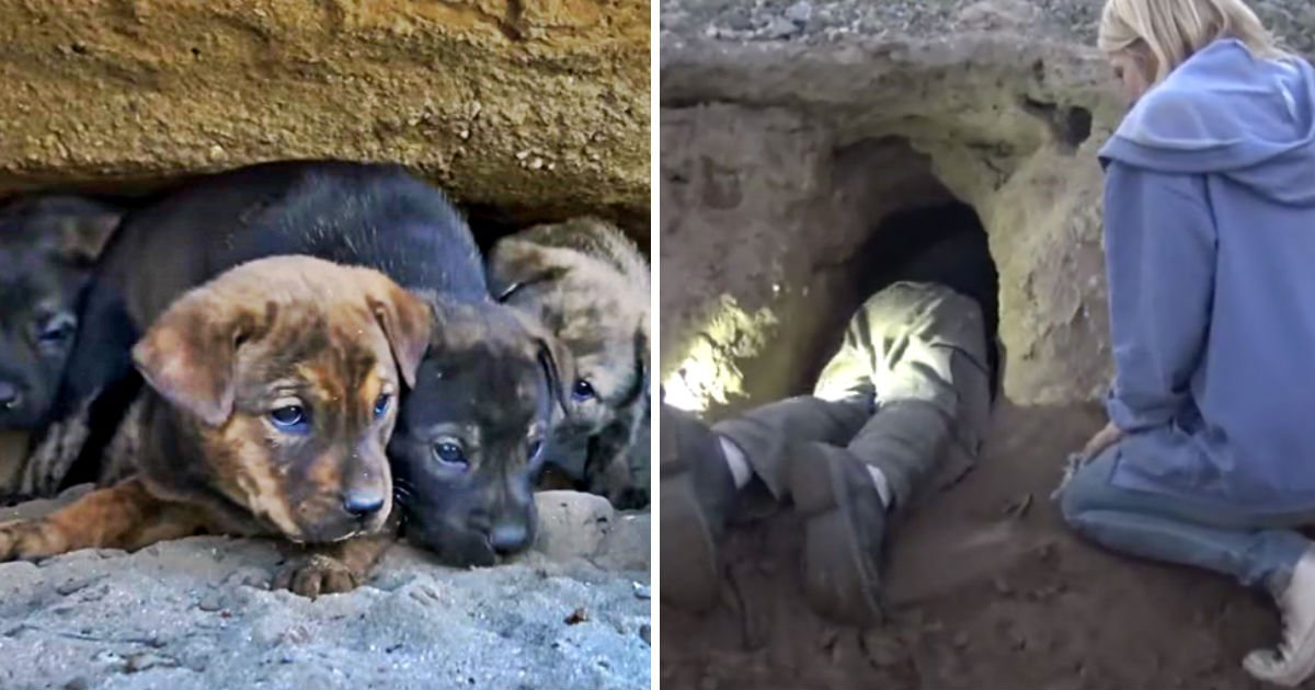 saving puppies heroes - They Are Trying To Save 8 Puppies From Cave. It Is Miraculous When They Gets The Last One