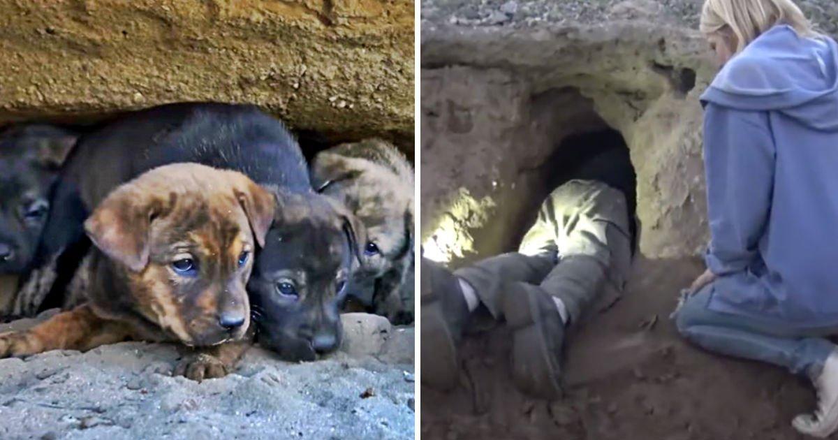 saving-puppies-heroes