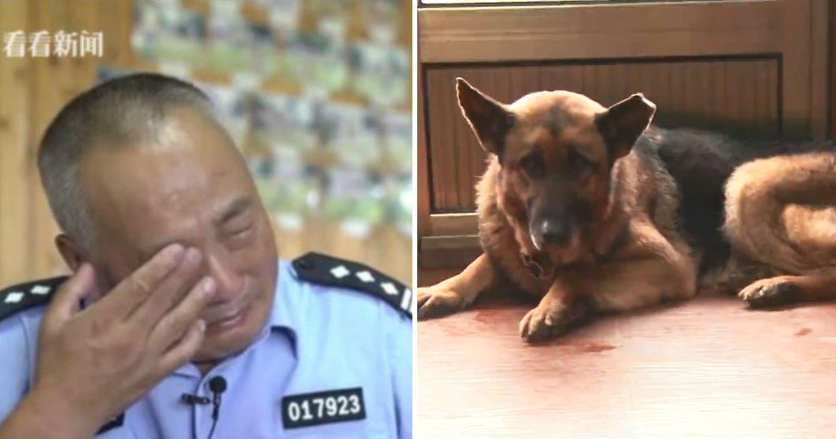 service-dog-caring