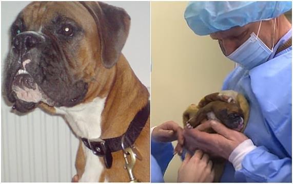 sooam.jpeg?resize=1200,630 - Não chore mais pelo seu cão - essa empresa quer te ajudar a trazê-lo de volta!