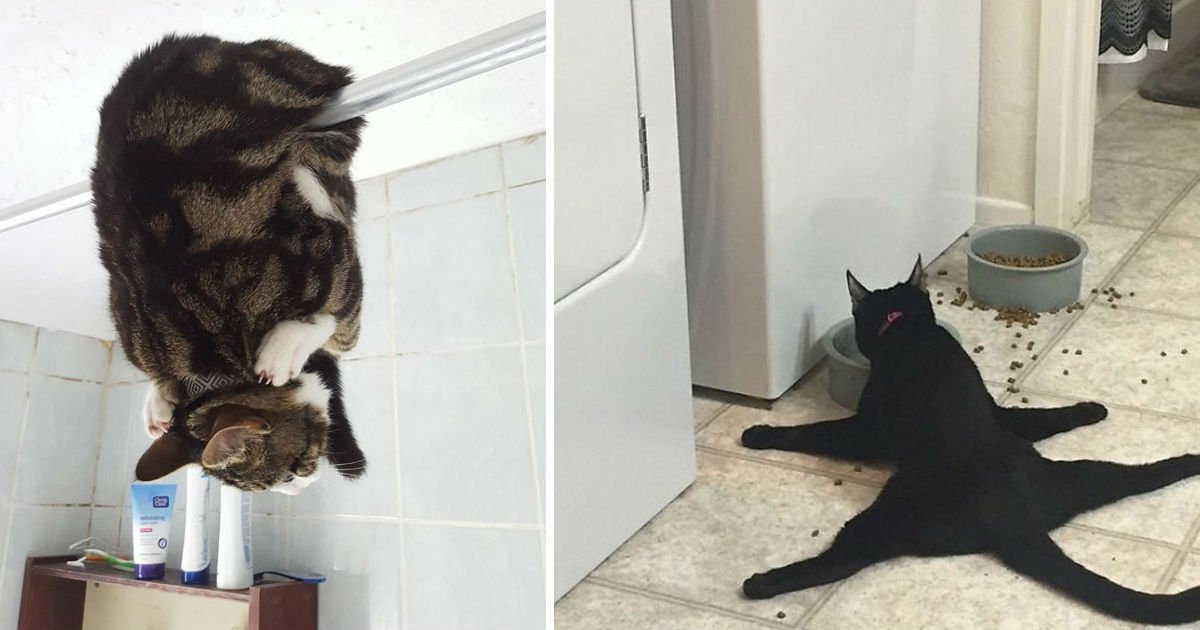 strange cats.jpg?resize=300,169 - 10 Cats That Prove That They Are Strange In Their Own Way!