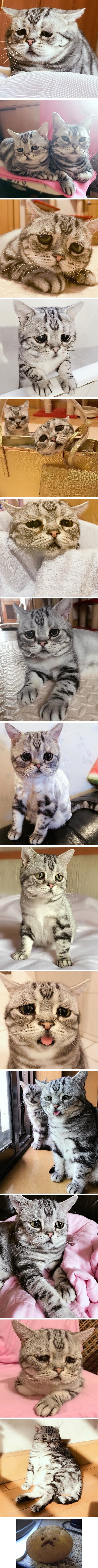 Meet Luhu, The Most Unhappy Cat In The World That Will Break Your Heart
