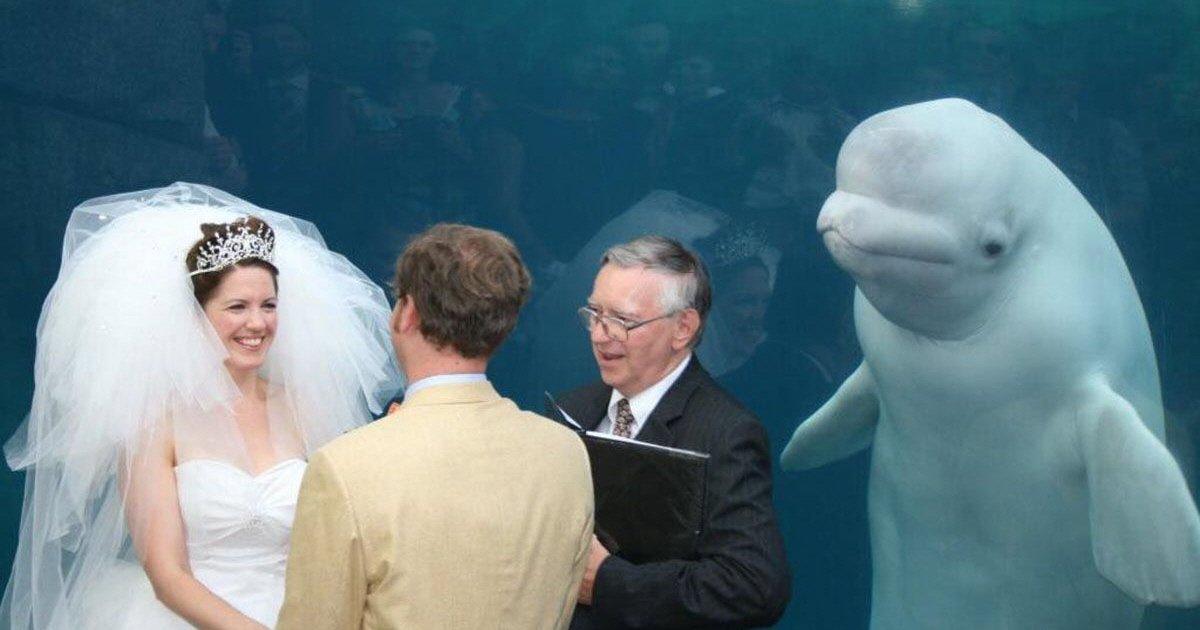 whale gate crashes couples wedding 1488192957.jpg?resize=1200,630 - '불청객' 돌고래가 결혼식에 참여했을 때 벌어지는 일 (사진 15장)